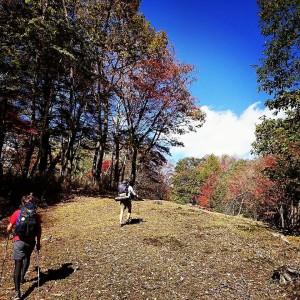 紅葉に染まる樹林帯を斉木峠へ、熊がついさっきまでいたであろう痕跡がたくさある。