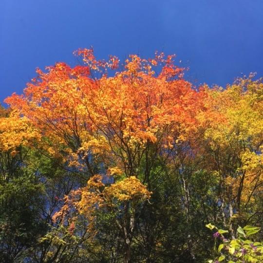 紅葉の名所が真っ赤に染まった光景も美しいのだが、自分は雑木林の中で自然に染まった赤、黄色、緑が織りなす光のコントラストが好きだ。