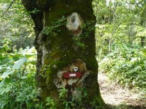 湿原後半に現れる1つ目の樹
