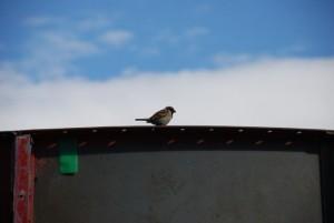 小鳥さんおはよう
