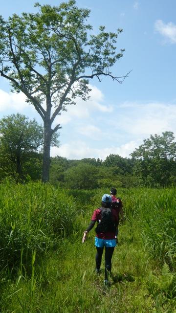 ここからケネカ湿原に入ります シューズは確実に濡れます