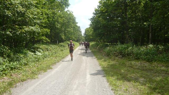 この先の長い林道しばらく写真を撮らなかった アブが凄くてずっと手で払ってたんで
