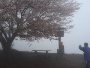 霧の中で今年最後の花見(桜)