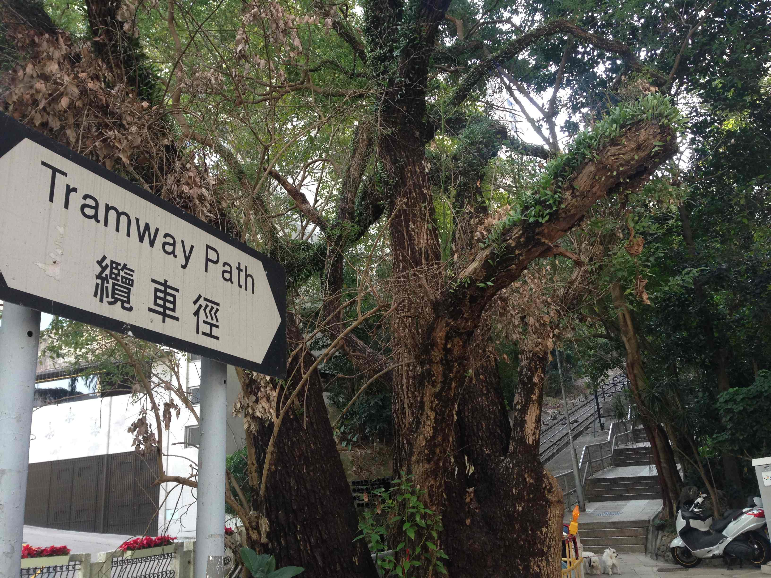 ロープウェイの横を並走できる道があります。