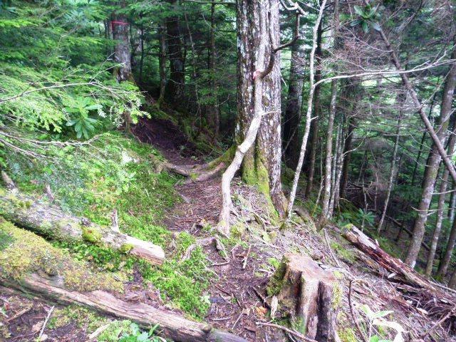 14.5km地点。登山道に入り走れる箇所はない。