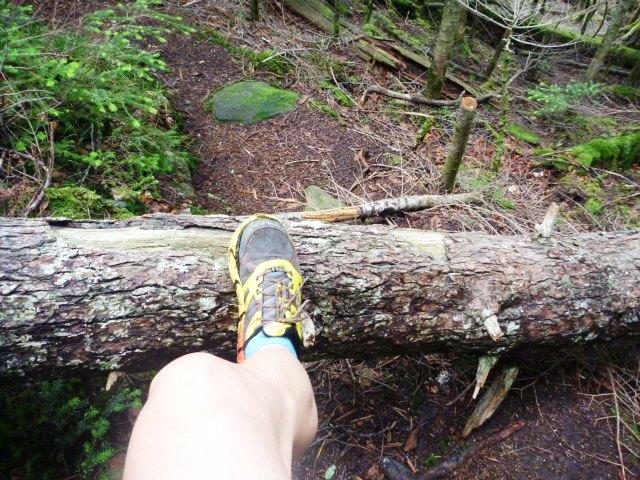 17.0km地点。倒木を乗り越えたり、くぐったり。
