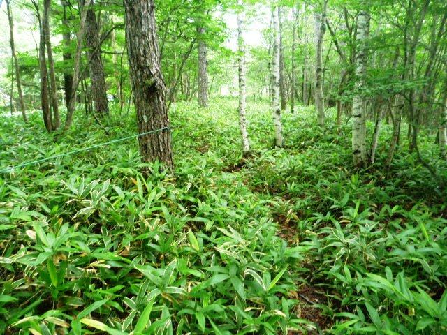 19.0km地点。笹藪あるが深くはなく下り基調で走りやすい区間が続く。