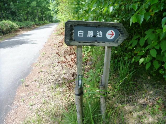 19.8km地点。登山道は終了。舗装路は右へ。稲子湯を目指す。