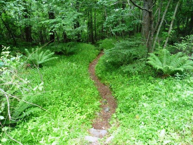 下りの登山道。