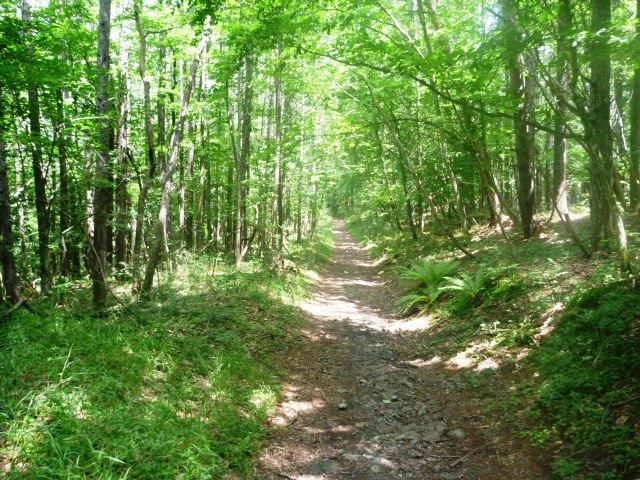 29km地点。走りやすい林道区間。
