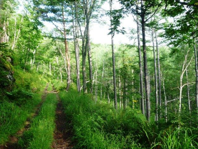 7.0km地点。美しい林が続く。